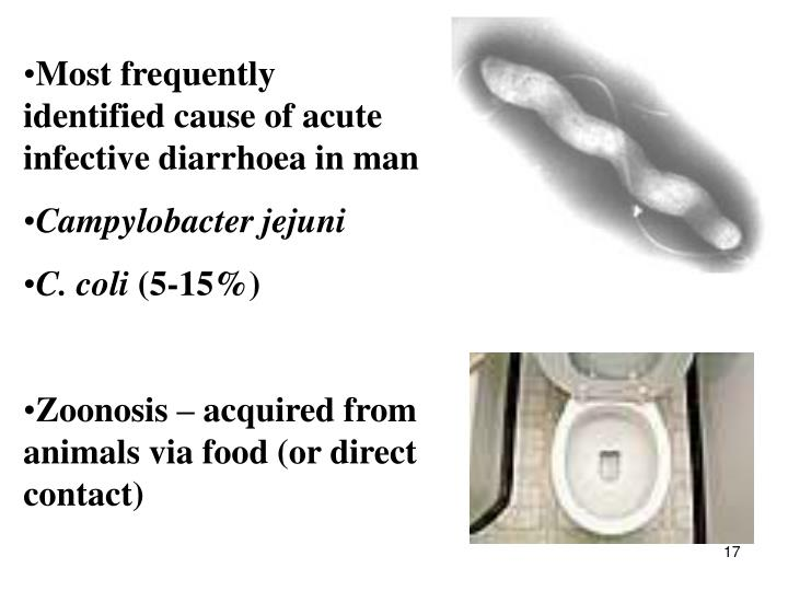 Most frequently identified cause of acute infective diarrhoea in man