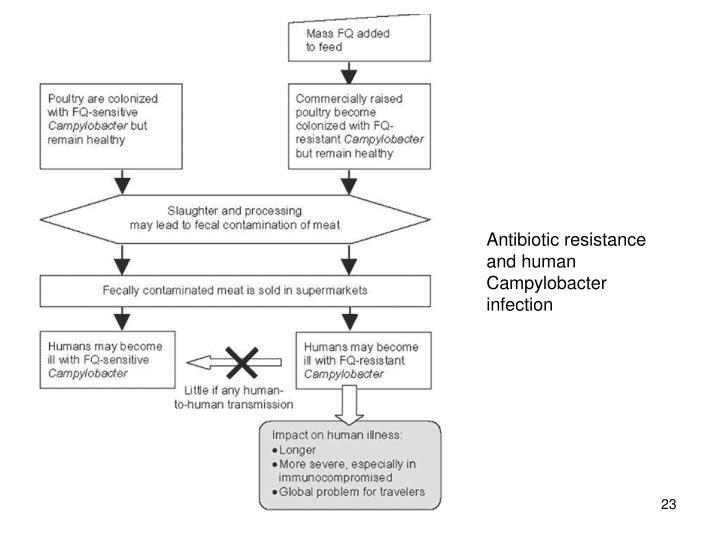 Antibiotic resistance and human Campylobacter infection
