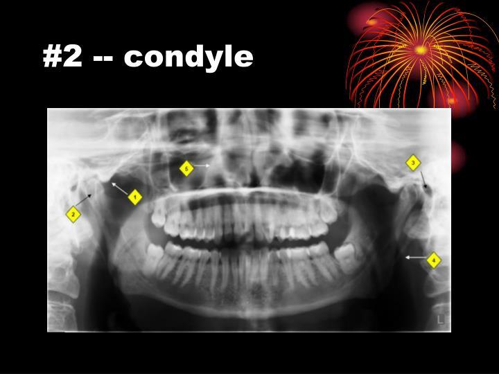 #2 -- condyle
