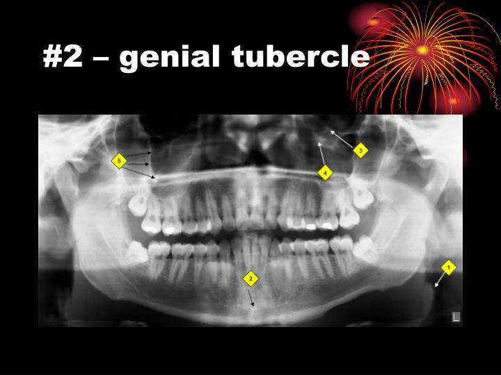 #2 – genial tubercle