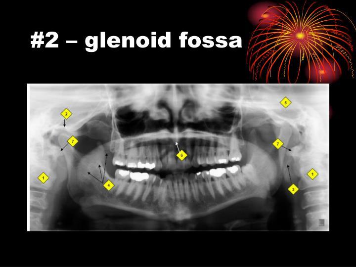 #2 – glenoid fossa