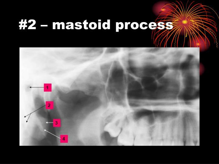 #2 – mastoid process