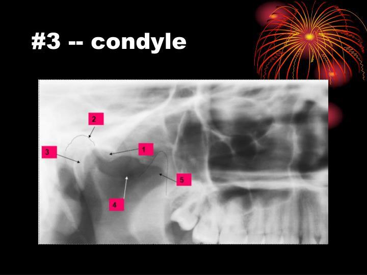 #3 -- condyle