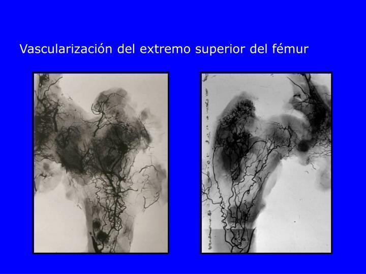 Vascularización del extremo superior del fémur