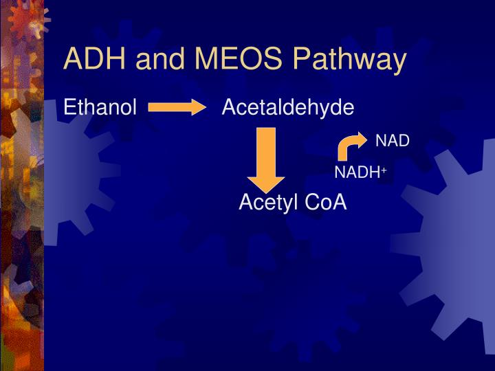 ADH and MEOS Pathway