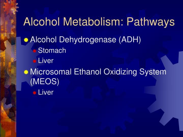Alcohol Metabolism: Pathways