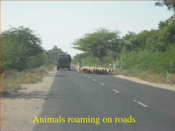 Animals roaming on roads