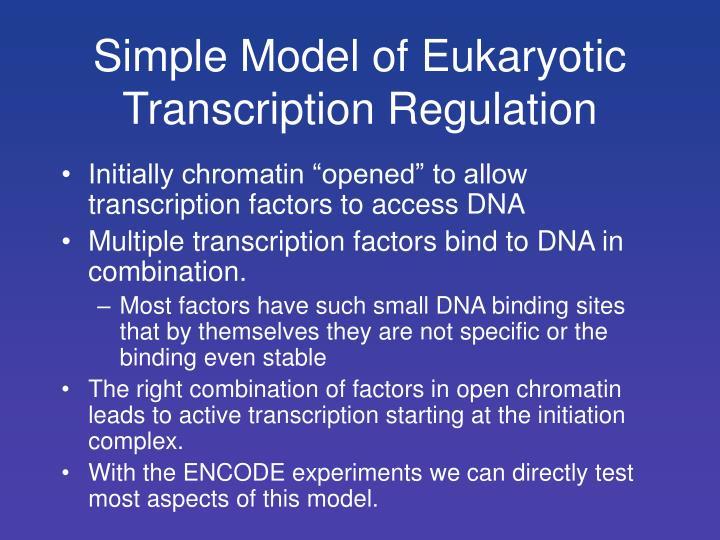 Simple Model of Eukaryotic Transcription Regulation