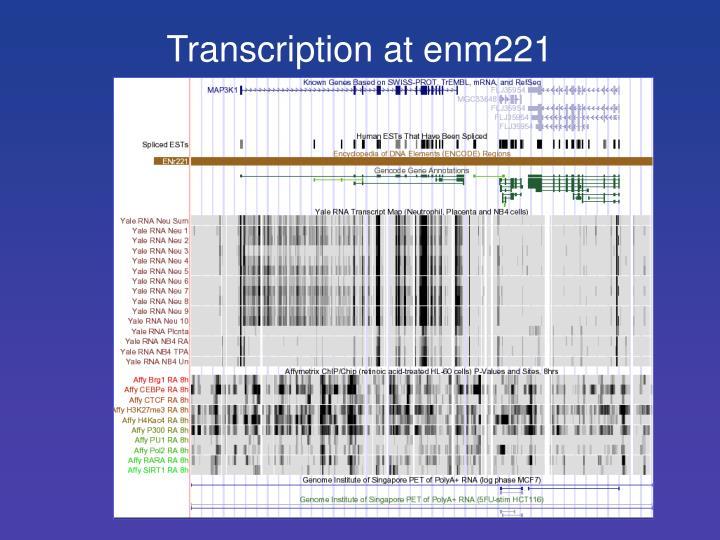Transcription at enm221