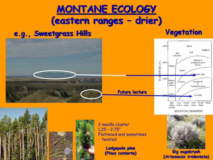 MONTANE ECOLOGY