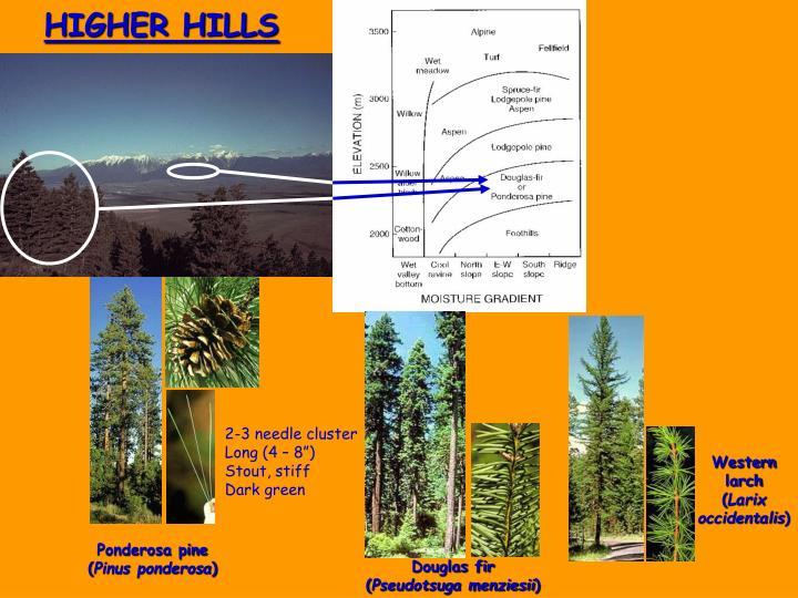 HIGHER HILLS