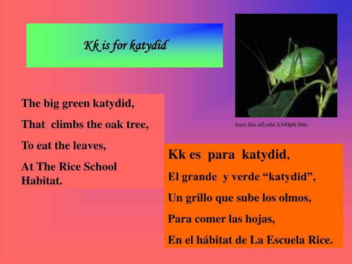 Kk is for katydid