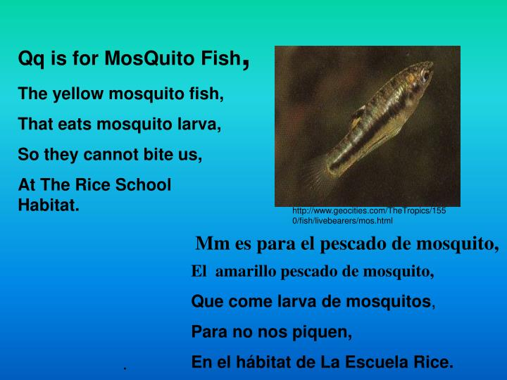 Qq is for MosQuito Fish