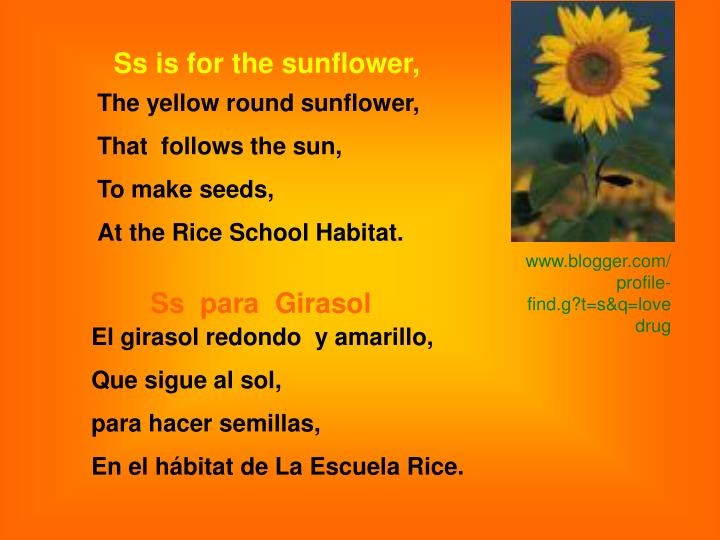 Ss is for the sunflower,