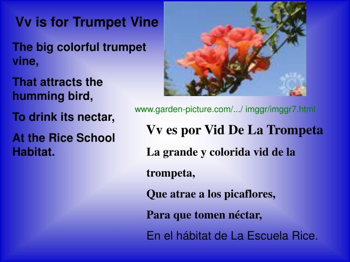 Vv is for Trumpet Vine