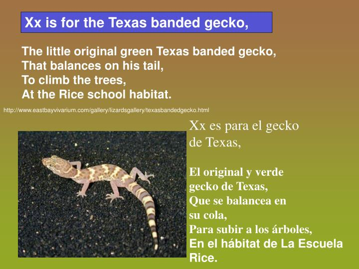 Xx is for the Texas banded gecko,