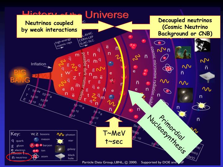 Neutrinos coupled