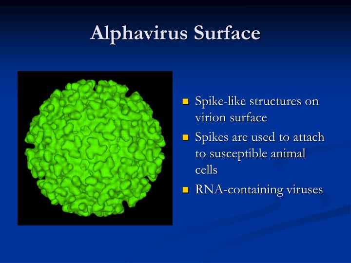 Alphavirus Surface