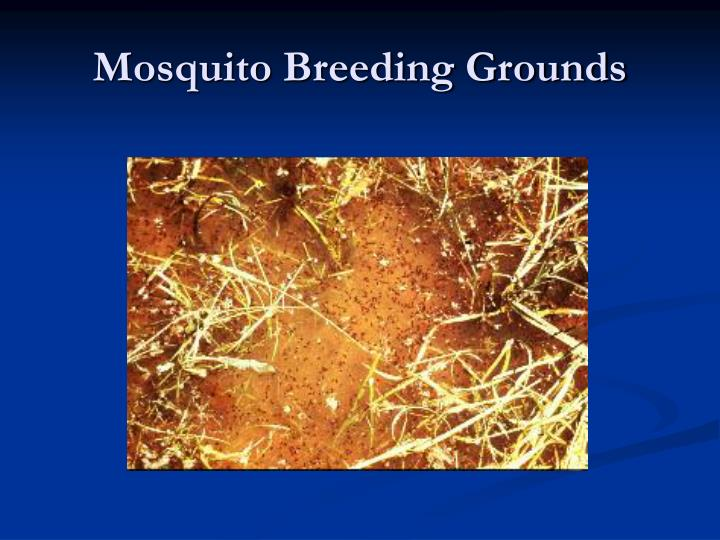 Mosquito Breeding Grounds