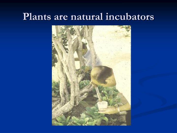Plants are natural incubators