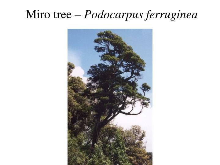 Miro tree –
