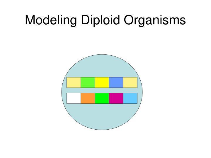 Modeling Diploid Organisms