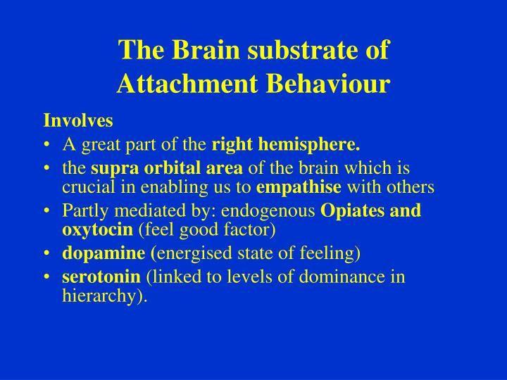 The Brain substrate of Attachment Behaviour