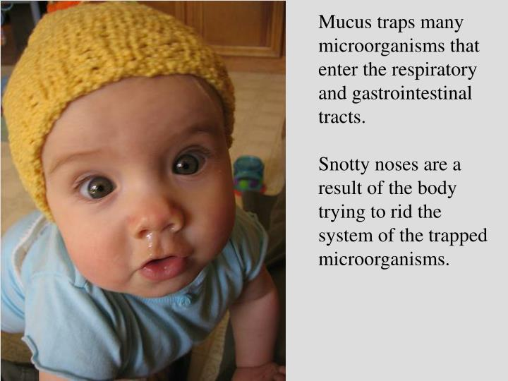 Mucus traps many microorganisms that enter the respiratory and gastrointestinal tracts.