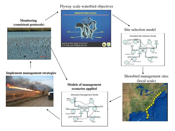 Flyway scale waterbird objectives