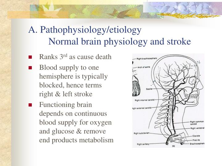 A pathophysiology etiology normal brain physiology and stroke