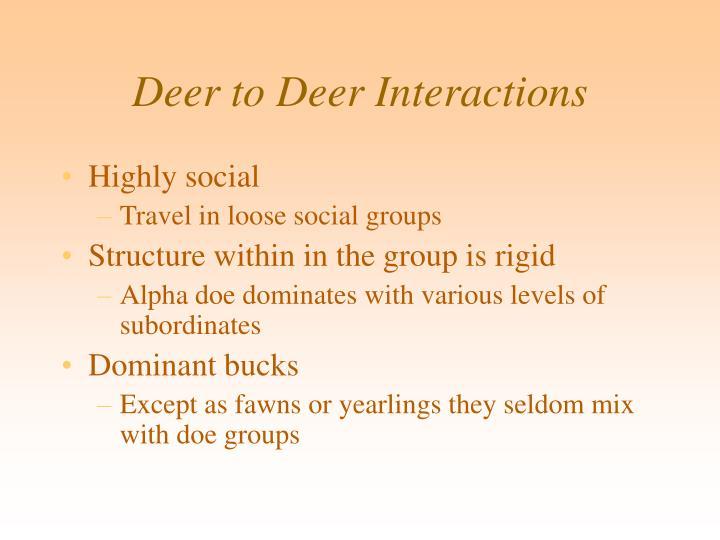 Deer to Deer Interactions