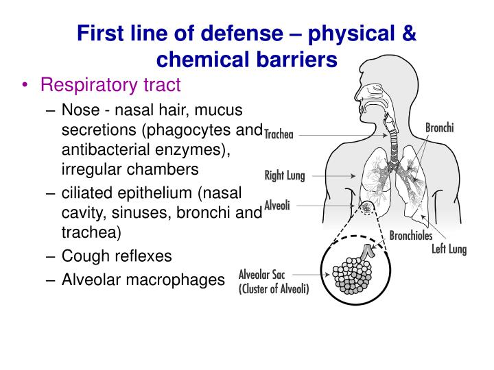 First line of defense – physical & chemical barriers