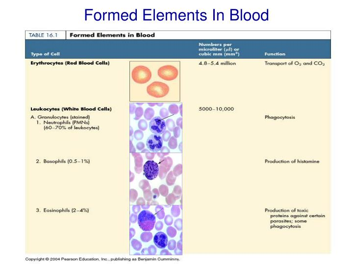 Formed Elements In Blood
