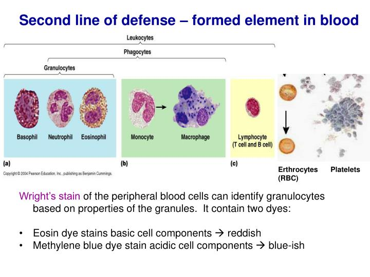 Second line of defense – formed element in blood