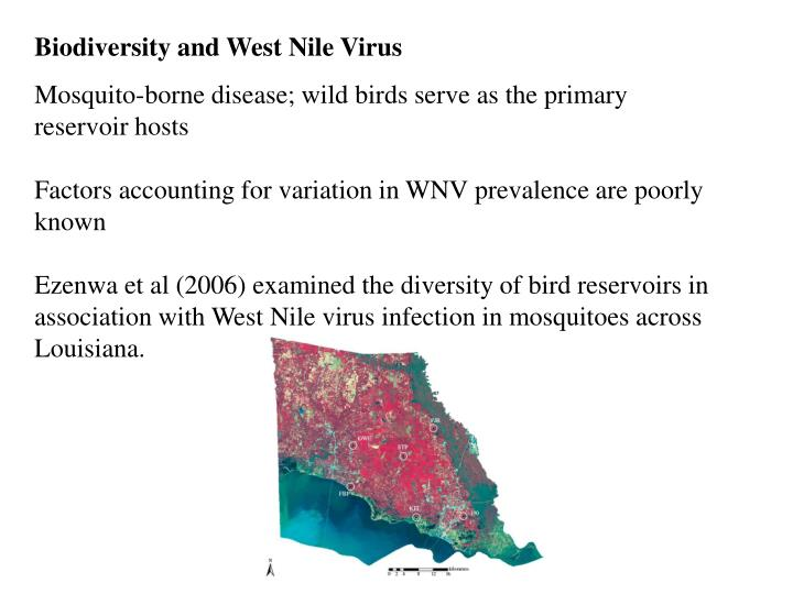 Biodiversity and West Nile Virus