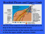 brachial plexus and upper limb3