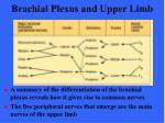 brachial plexus and upper limb6
