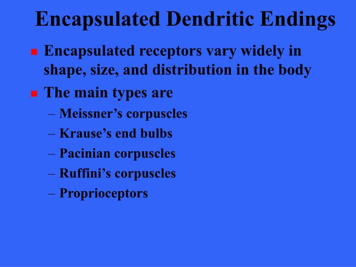 Encapsulated Dendritic Endings