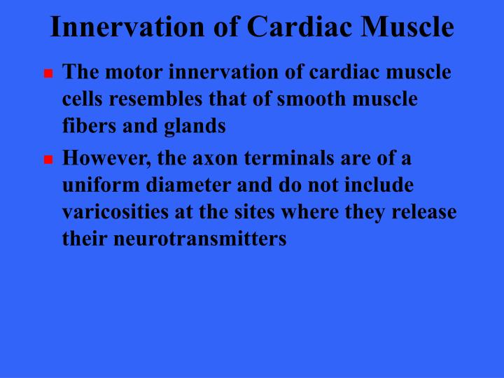 Innervation of Cardiac Muscle