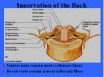 innervation of the back1