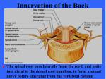 innervation of the back2