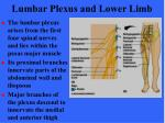 lumbar plexus and lower limb