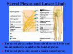 sacral plexus and lower limb