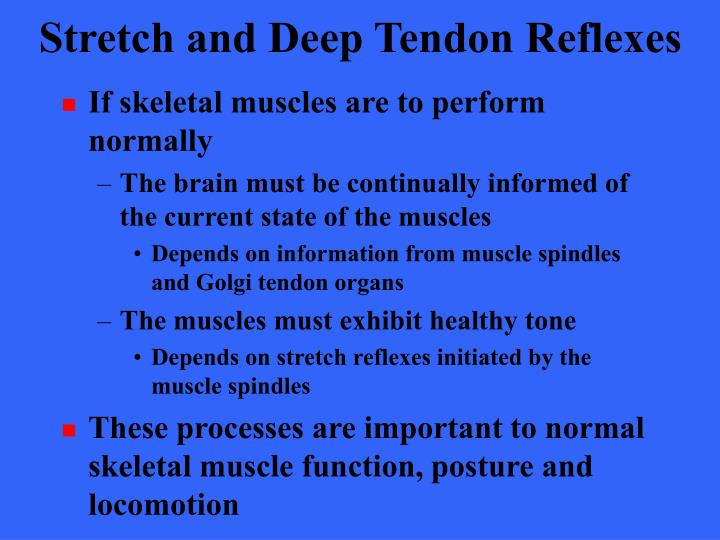 Stretch and Deep Tendon Reflexes