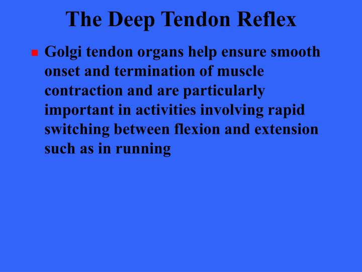 The Deep Tendon Reflex