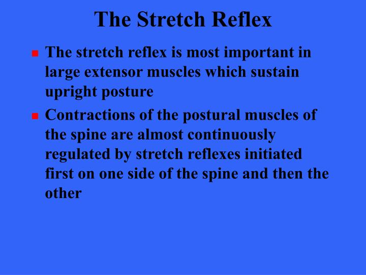 The Stretch Reflex