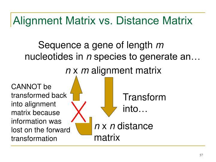 Alignment Matrix vs. Distance Matrix