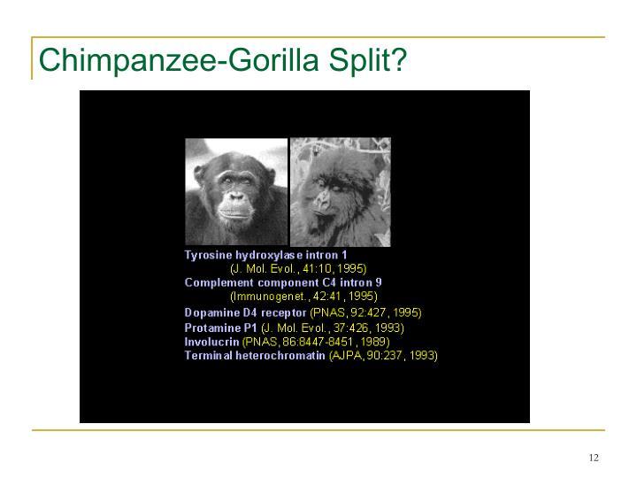 Chimpanzee-Gorilla Split?