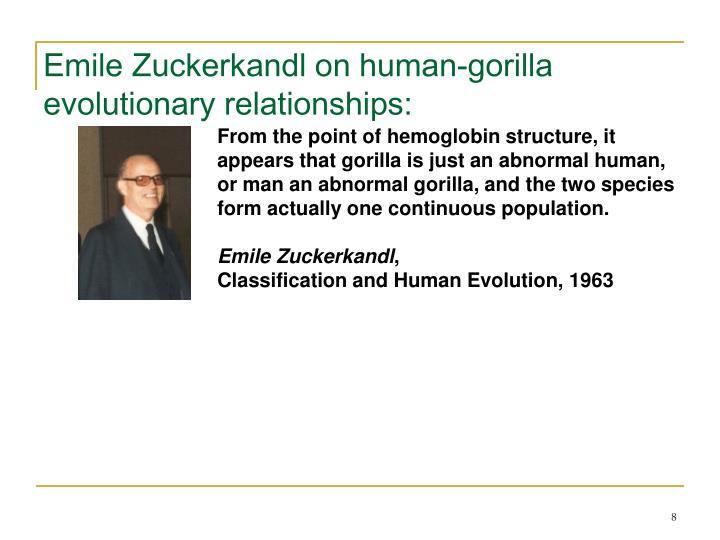 Emile Zuckerkandl on human-gorilla evolutionary relationships: