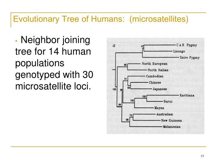 Evolutionary Tree of Humans:  (microsatellites)